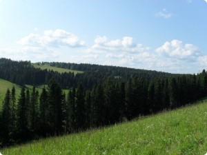 стихи про Нолинск (2)